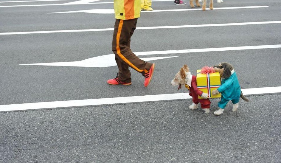 Two Little Dogs Carrying Present