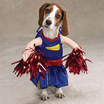 beagel dressed like cheerleader