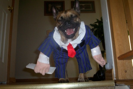 business man suit tie dog halloween