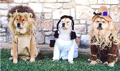 wizard of oz dog halloween dorthy scarecrow and lion
