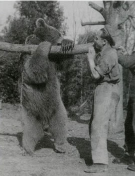 Wojtek - Polish Soldier Bear